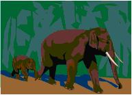 La famille éléphant