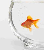 Un poisson qui faisait des bulles